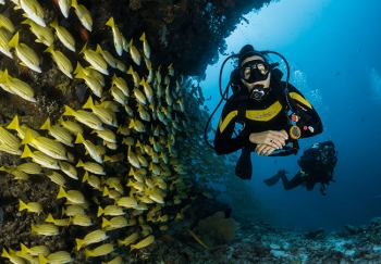 Diving in the Fish Cave - Cuba
